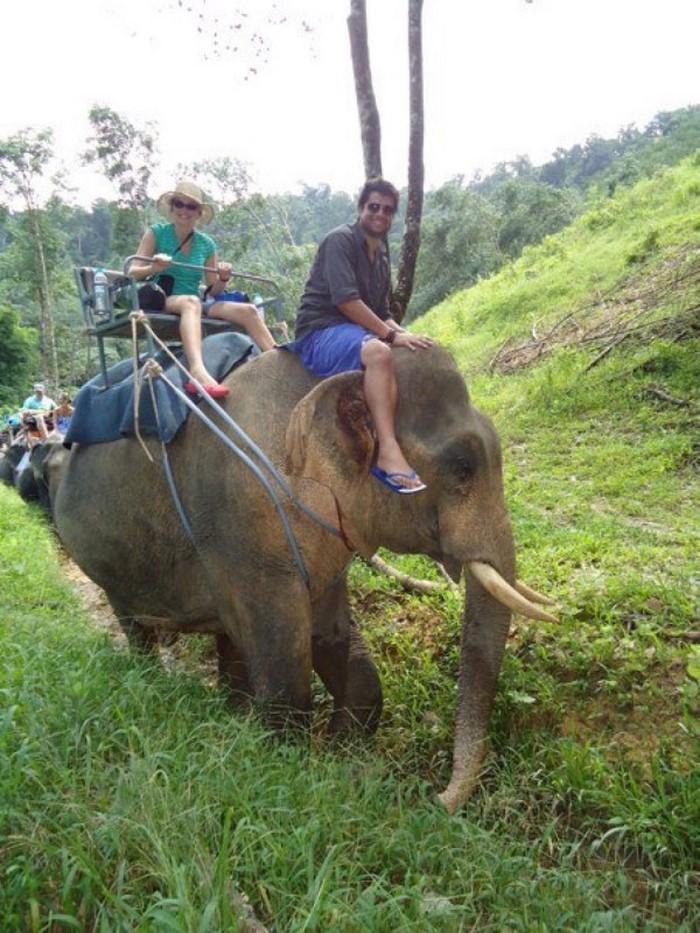 Обратная сторона туризма. Как страдают слоны((