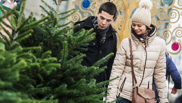 В России предложили разрешить гражданам самим рубить елки к Новому году