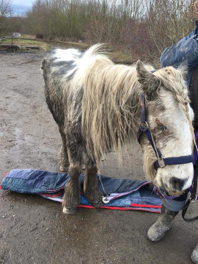 Хозяин не хотел лечить пони, поэтому просто выгнал практически слепое животное