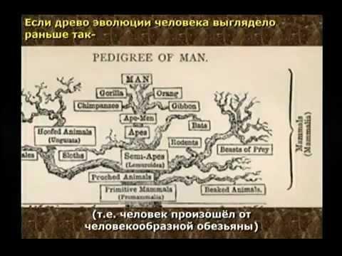 Как появилась жизнь на земле? Как появился человек?