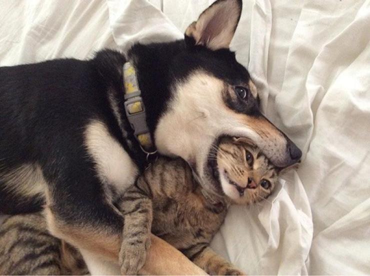 Кто умнее - кошка или собака? Енот!