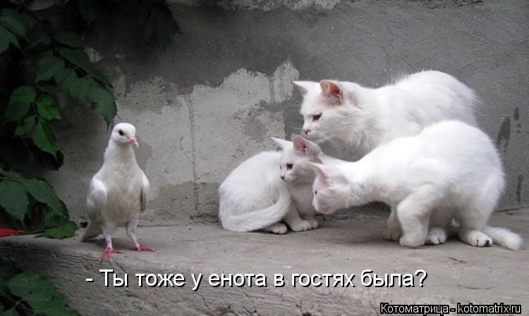Котоматрица: - Ты тоже у енота в гостях была?