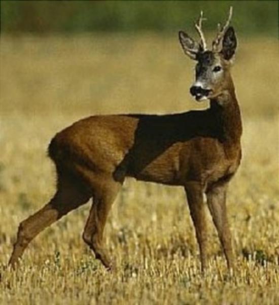 Охотничий календарь: август