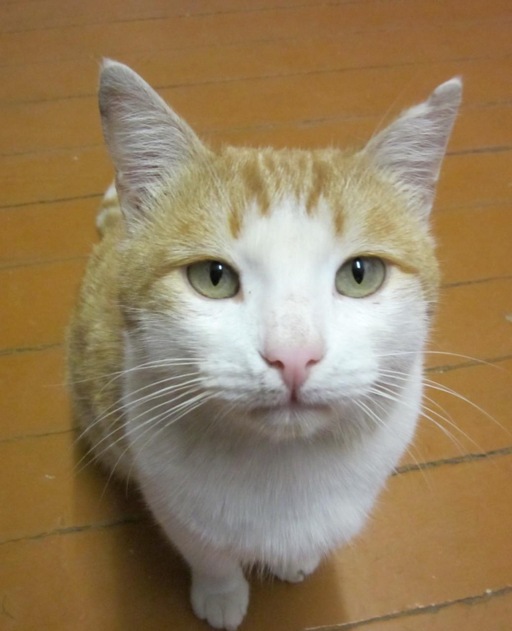 наш кот Гриша
