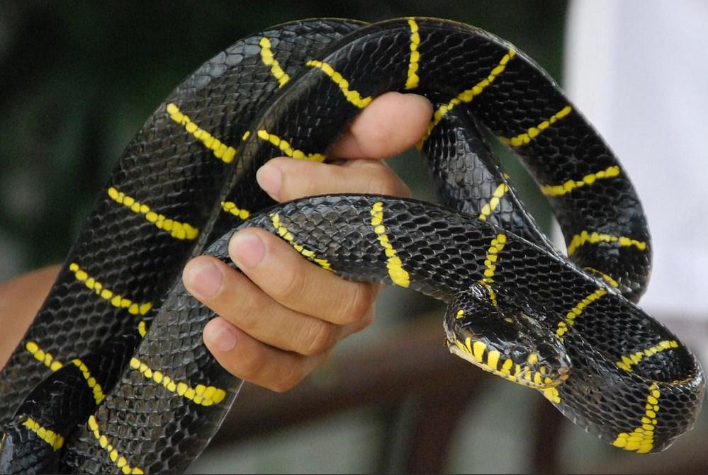 Генетики рассказали, как появился новый коронавирус - китаец сожрал больную змею