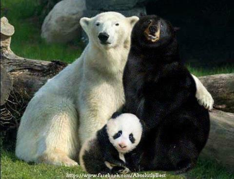 Белый + гималайский = панда:))))
