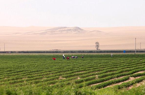 Китайские ученые нашли способ выращивать урожай в пустыне