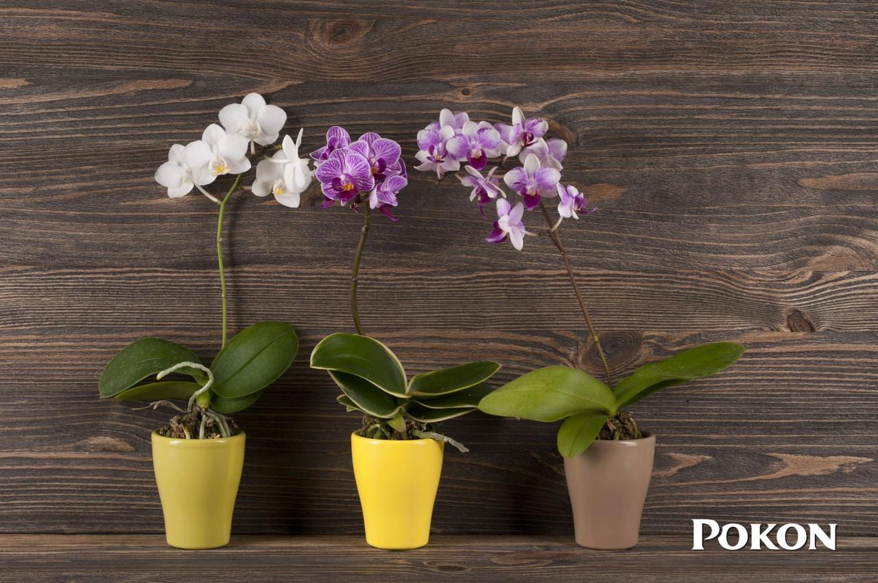 Пусть всегда будет зелень! Восстановление хвойных и комнатных растений после зимы