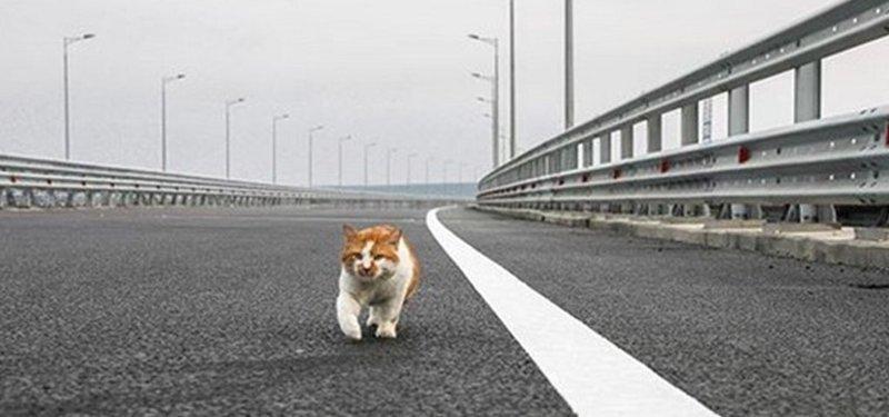 Кот Мостик - талисман Крымского моста