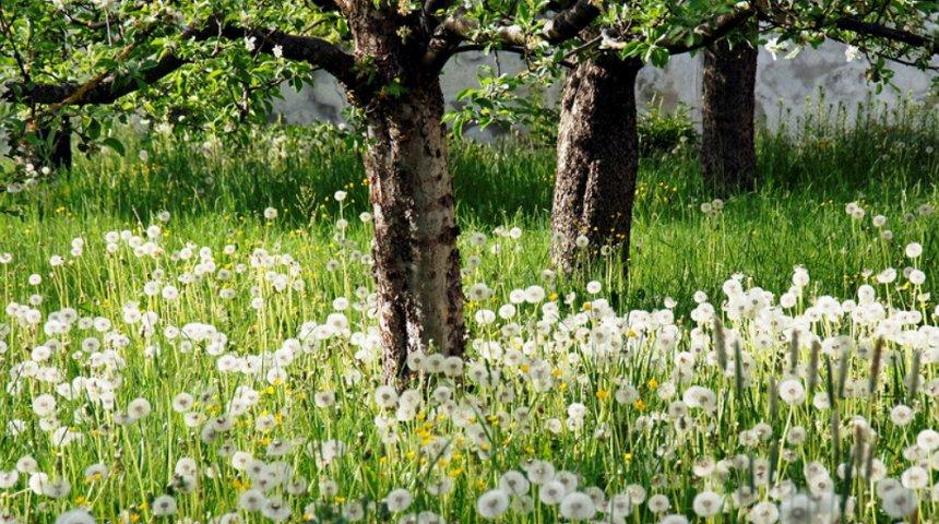 Растения-агрессоры, или Какие культуры нельзя сажать рядом