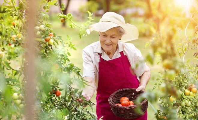 Земельный налог для пенсионеров в 2018 году – кого освободили от уплаты