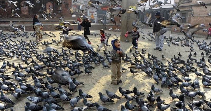 Санкции городских властей против голубей: чем птица мира насолила людям