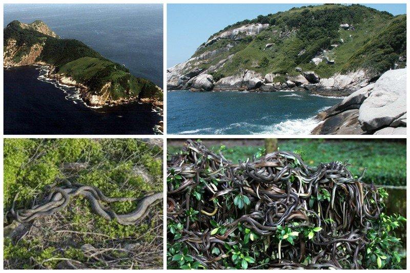 Змеиный остров (Кеймада-Гранди), Бразилия. не грозит этому острову вырубка лесов, туристы и вообще посетители. Все потому, что остров буквально кишит ядовитыми змеями, чей яд настолько сильный, что растворяет плоть. жизнь, земля, интересное, необитаемые острова, факты