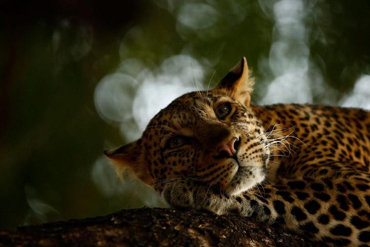 Лучшие фотографии дикой природы с конкурса в Англии