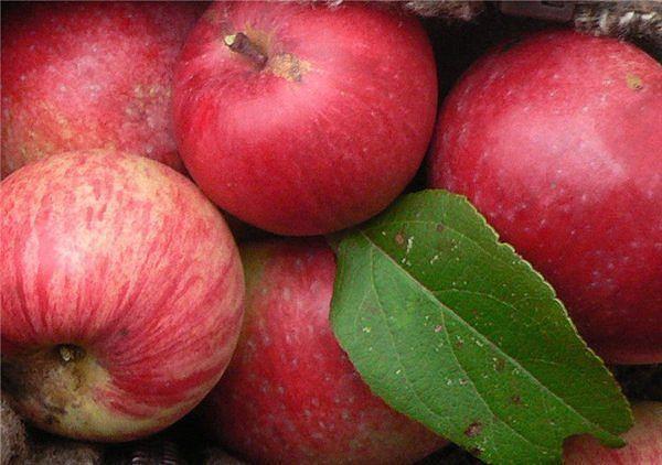 Съедаем два яблока в день и нам не будут нужны врачи...