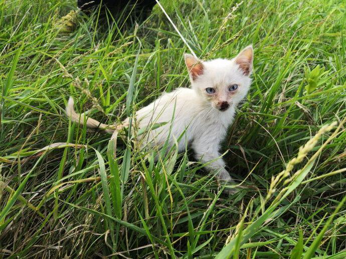 Полевой шипелкин. Света посреди поля нашла диковатого котенка, взяла его себе и одомашнила