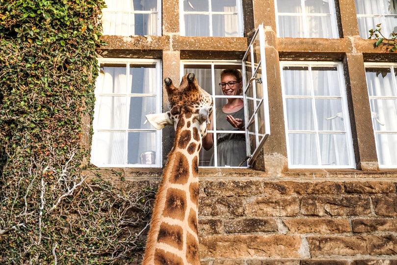 Особо удачливые могут покормить жирафиков со второго этажа (www.thebackpackway.com)