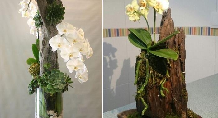 композиции из орхидей в интерьере