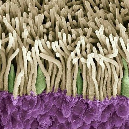 Красота внутри: микробиолог из Уфы показывает в инстаграме вирусы и бактерии, которые живут в нас вирус, микробиолог, микроорганизм