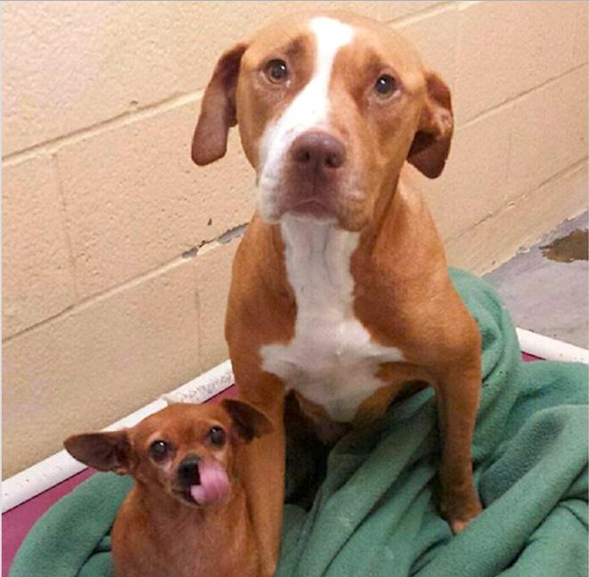«Без тебя — никуда!»: собаки ни за что не хотели разлучаться и помогли друг другу выжить