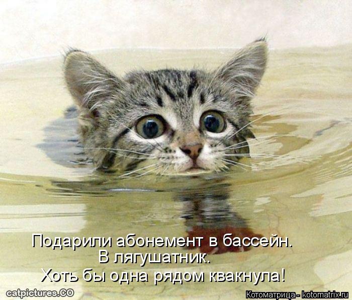 Котоматрица: Подарили абонемент в бассейн.  В лягушатник. Хоть бы одна рядом квакнула!