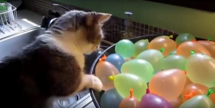 Эти забавные коты и непонятн…