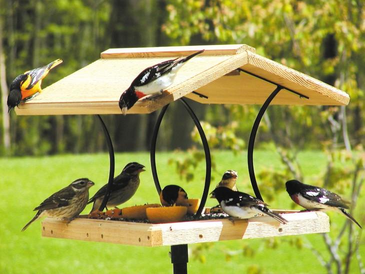 Кормушка для птиц своими руками из подручных материалов