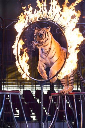 В Мексике законодательно запретили использовать в цирке диких животных