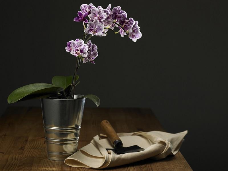 если корни орхидеи высохли