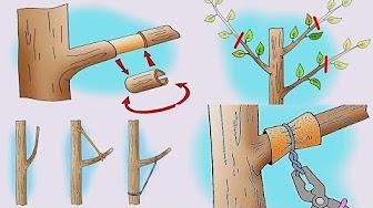 Почему деревья не плодоносят и как заставить дерево приносить плоды Хитрые советы для садовода