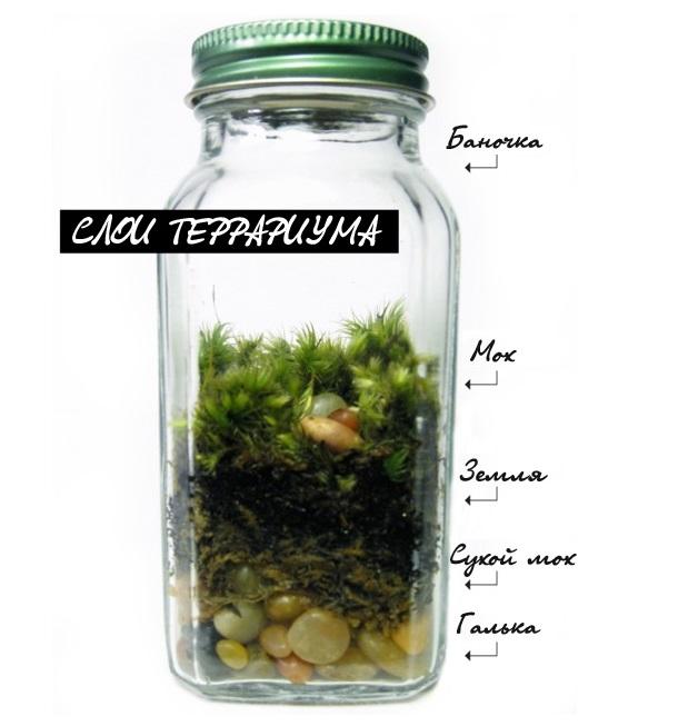 Создаем свой флорариум - подробное описание
