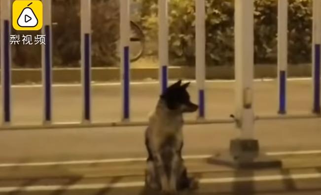 В Китае собака уже третий месяц ждёт хозяйку на месте ее гибели