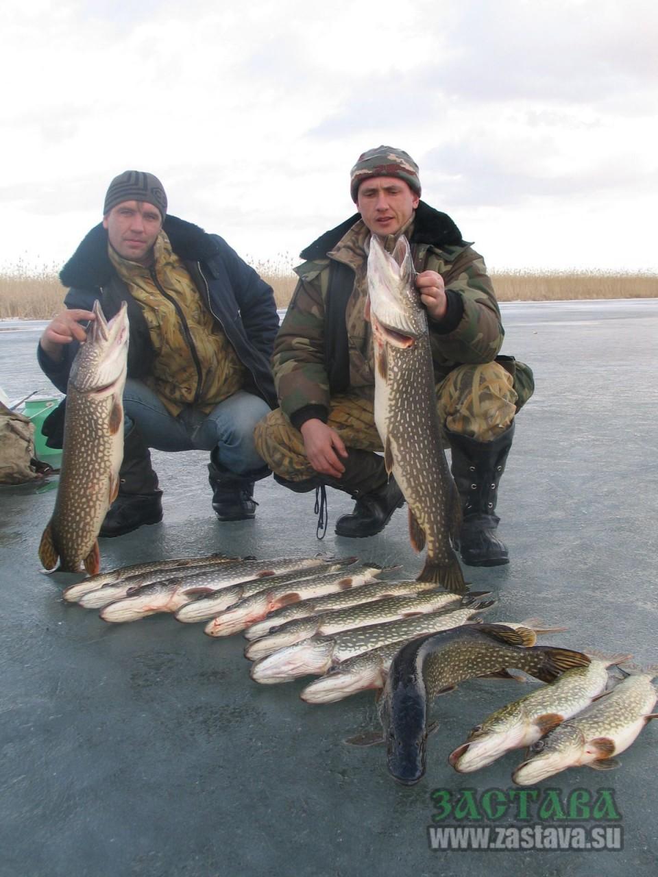 рыбалка на шатском водохранилище видео