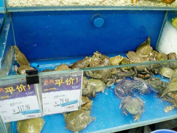 Лягушки и черепахи в китайских супермаркетах