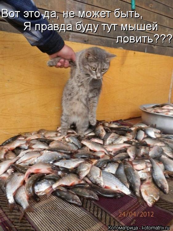 Котоматрица: Вот это да, не может быть,  Я правда буду тут мышей  ловить???