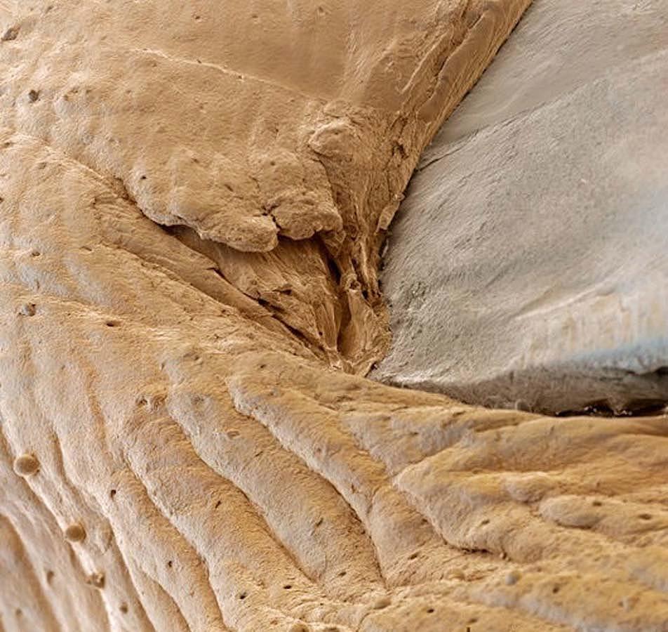 15udivitelnixsozdanii 6 15 удивительных созданий которых не разглядеть без микроскопа