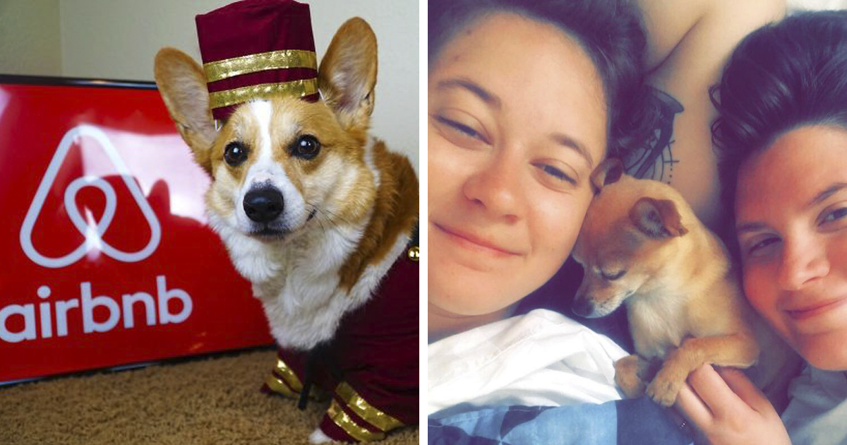 63 Times People Were Pleasantly Surprised To Find Cats And Dogs In Their Airbnb Apartments