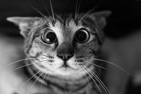 И тут увидел кот убитую им крысу... его истерику не передать словами...