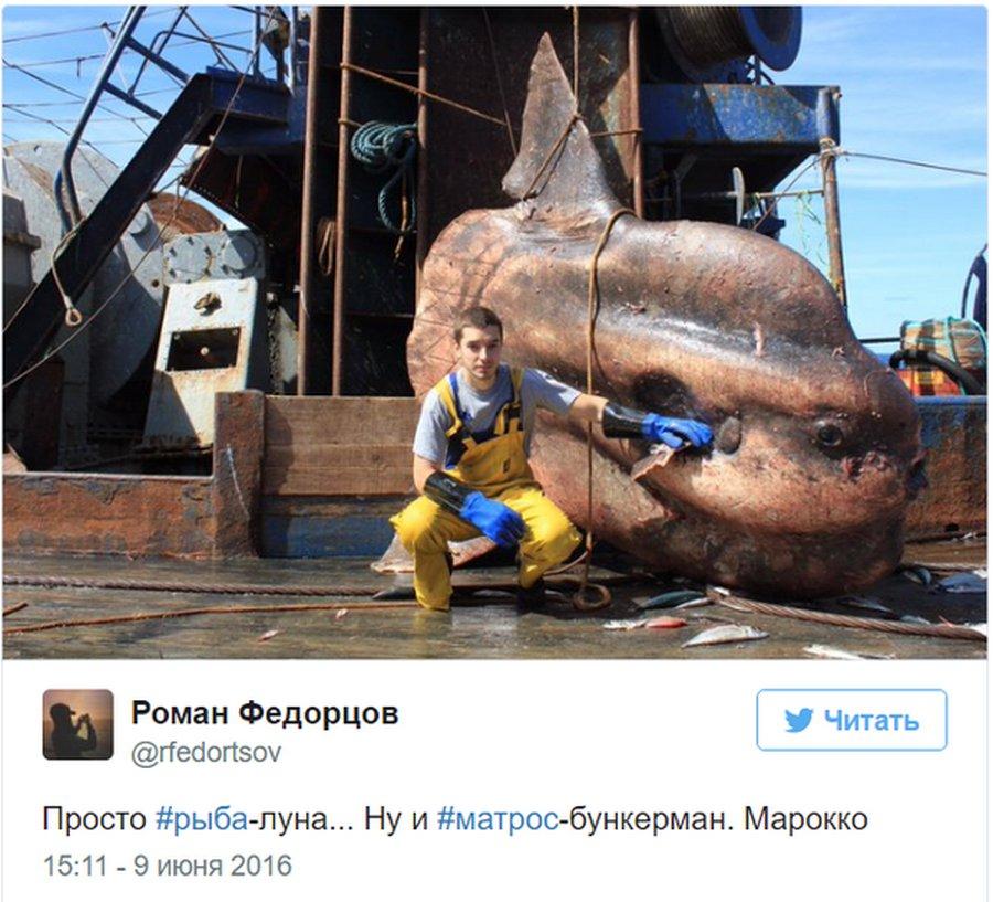 Мурманский моряк выкладывает фото самых удивительных рыб, пойманных его траулером