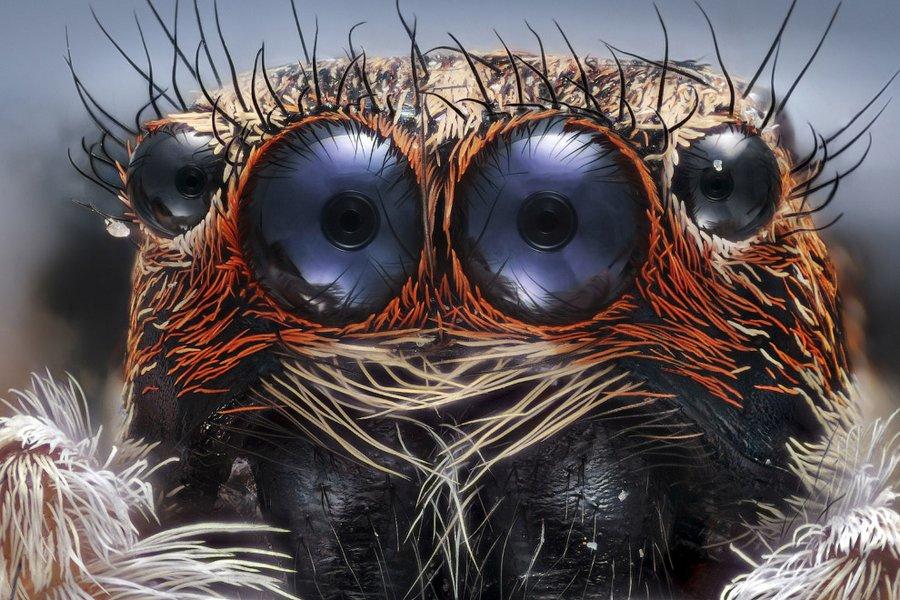 Секс долгоносиков, яйца мотыля и другие фото при помощи микроскопа