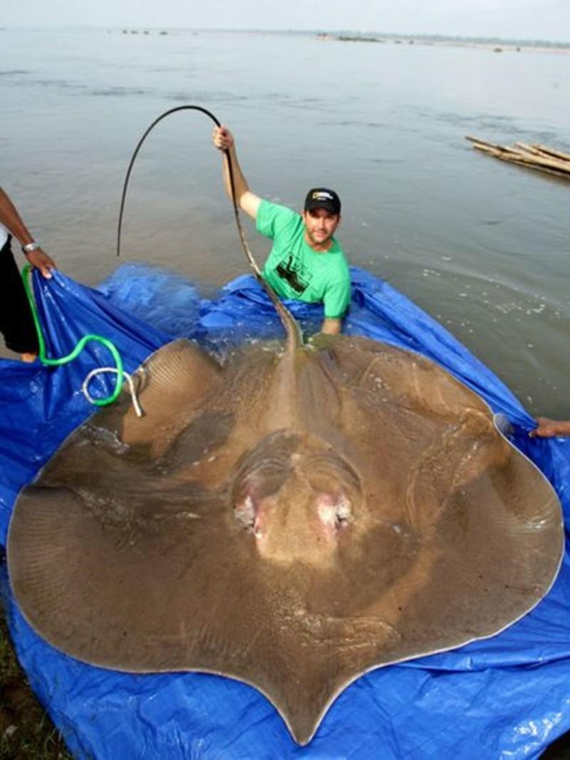 Впрочем, необычной рыбе даже не обязательно быть рыбой, чтобы удивлять морские монстры, рыбалка, рыбы