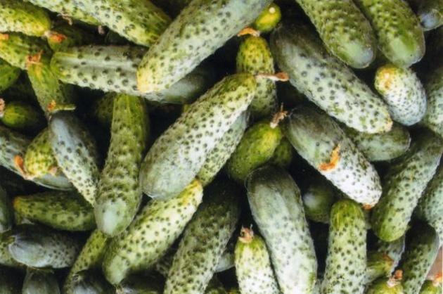Огурцы августовского посева