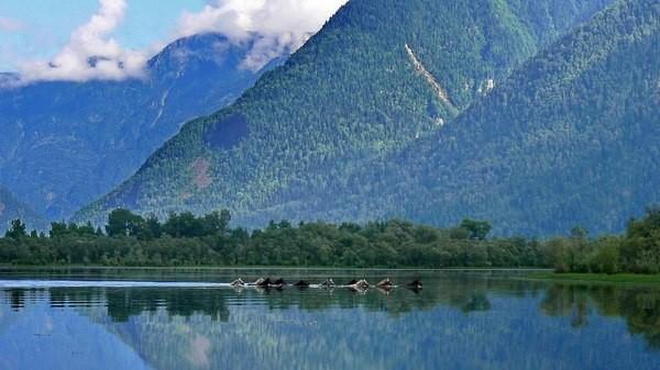Телецкое озеро глубокое озеро, природа, факты