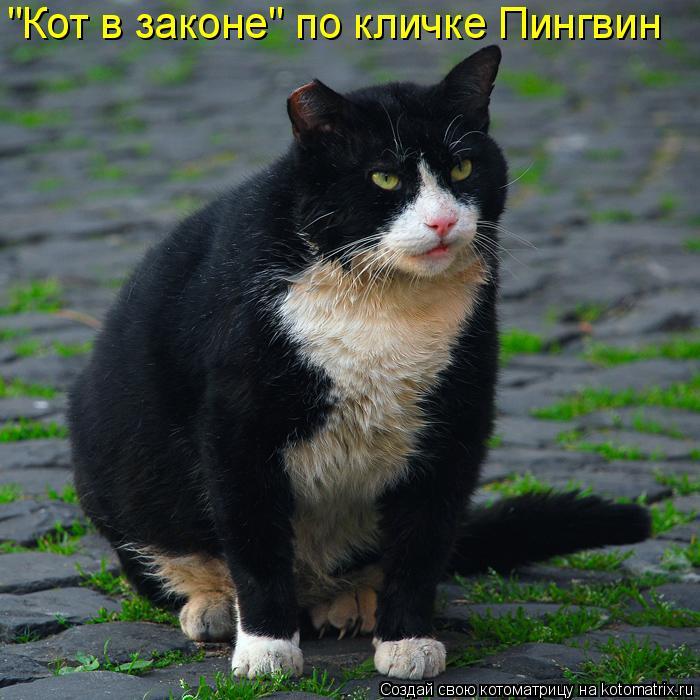 """ЗВЕРоКОТоМАТРИЦА""  НА ПЯТНИЦУ"