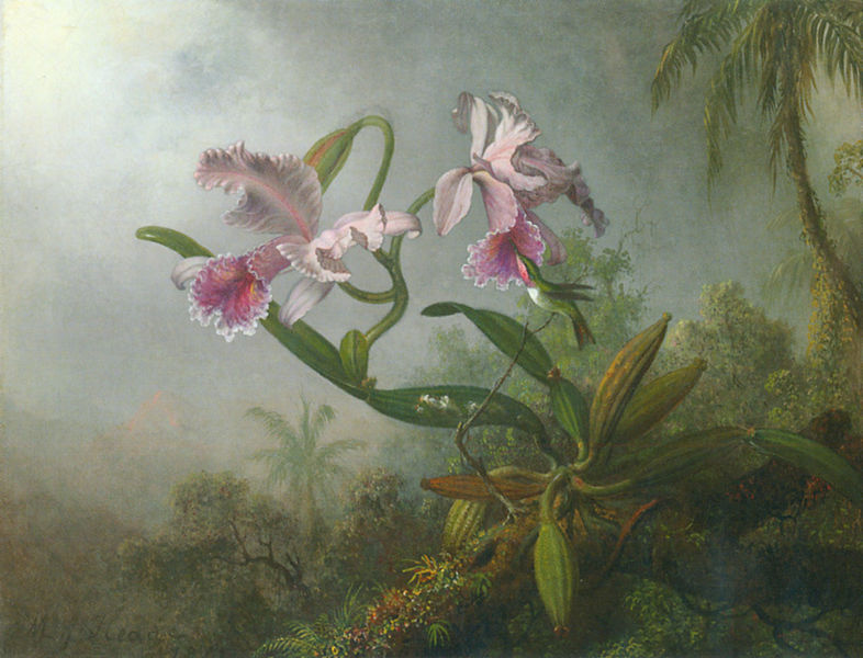 File:Heade orchid-hummingbird.jpg