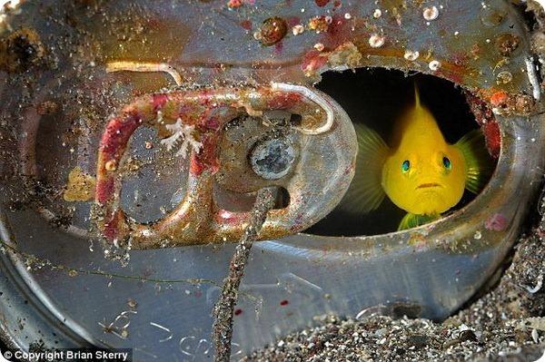 Подводный мир от фотографа Брайана Скерри