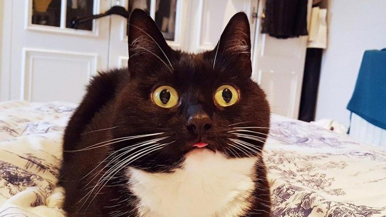 Необыкновенная красотка! Зельда – кошка со всегда удивлёнными лазами