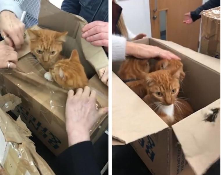 В маленьких картонных коробк…