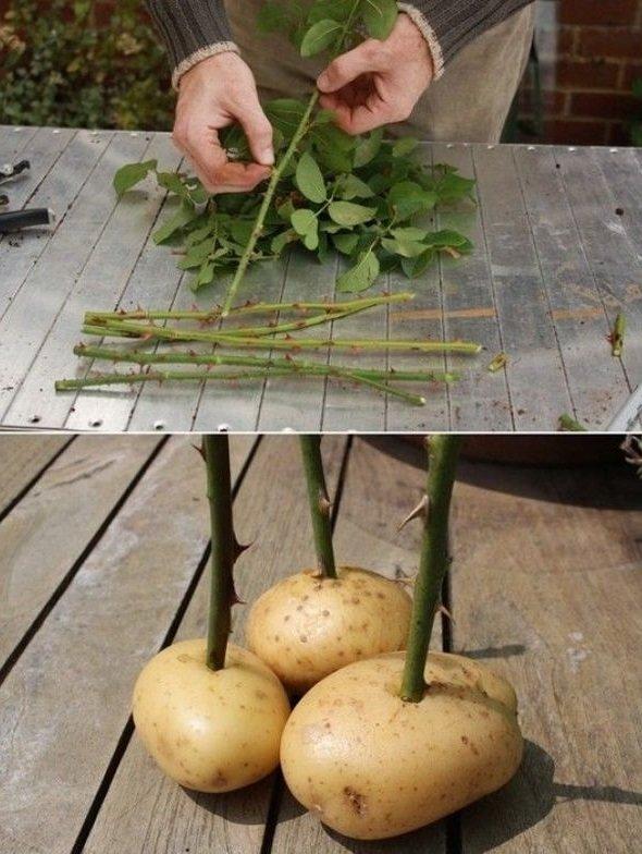 Сад своими руками: 30 полезных лайфхаков для дачников