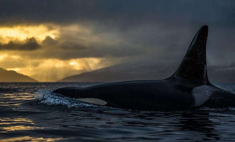 Профессор-биолог делает невероятные снимки гренландских китов киты, красота, природа, фото